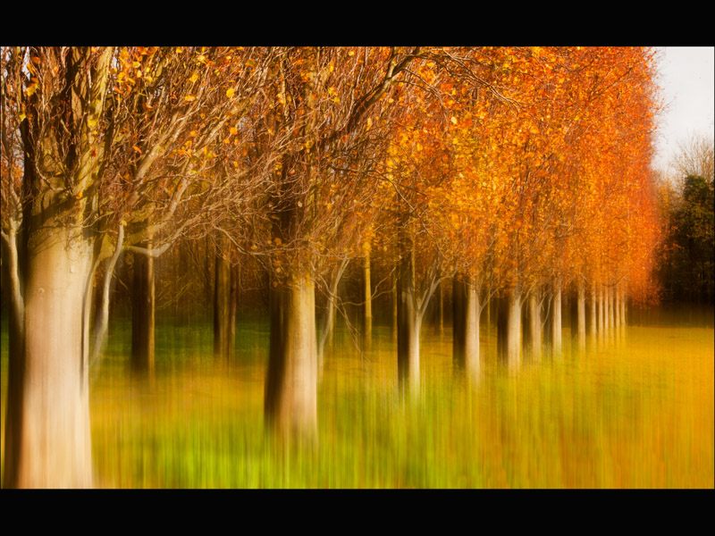 TREE LINED WAY by Allan Marshall
